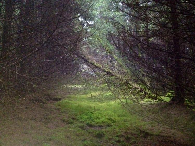 Forest at Lisroe, Kilmaley. Image Kylie Carter