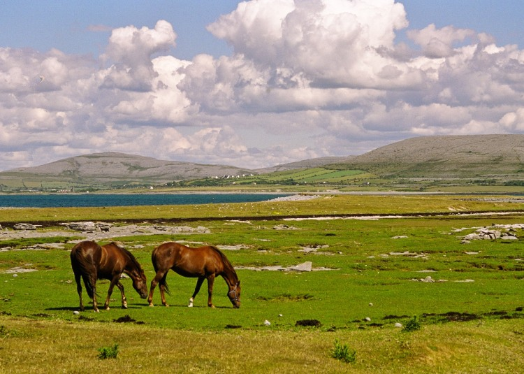 A beautiful day in the Burren, near Ballyvaughan, County Clare. Image IrishLandscapes.ie
