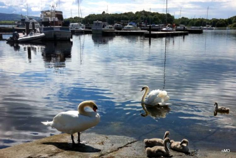 SWAN LAKE - Mountshannon Harbour in the sunshine. Photo by Maureen Devanny