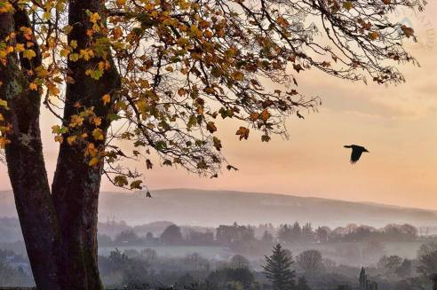Autumn mist in Corofin Co. Clare. Photo Clare by Nature