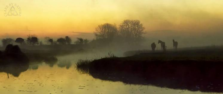 Early morning mist along the banks of the River Fergus, near Corofin in County Clare. Photo Clare by Nature https://www.facebook.com/clarebynature
