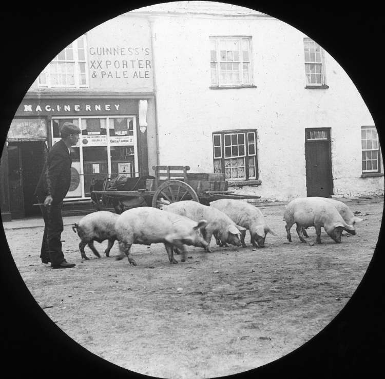 Pigs on Parnell Street