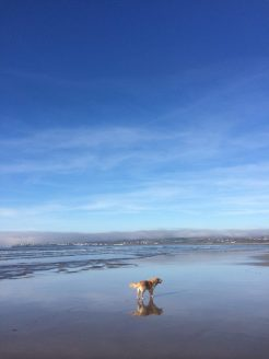 Blue skies at Lahinch, Co. Clare. Photo Caitriona Considine