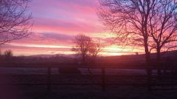 Frosty sunrise, Tulla, Co. Clare. Photo Alison Donovan